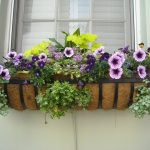 window-box-891985_960_720
