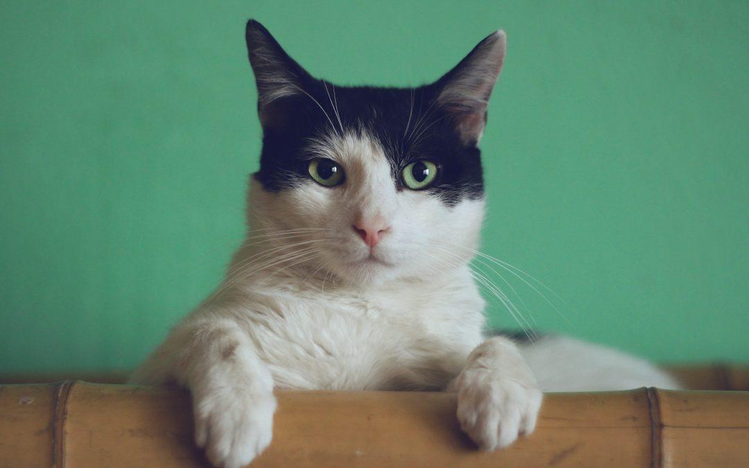 Få din nattesøvn tilbage med en kattelem