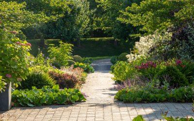 Glæd din have med spagnum